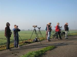 Vogelaars bij Eurobirdwatch 2011 in Polder IJdoorn.