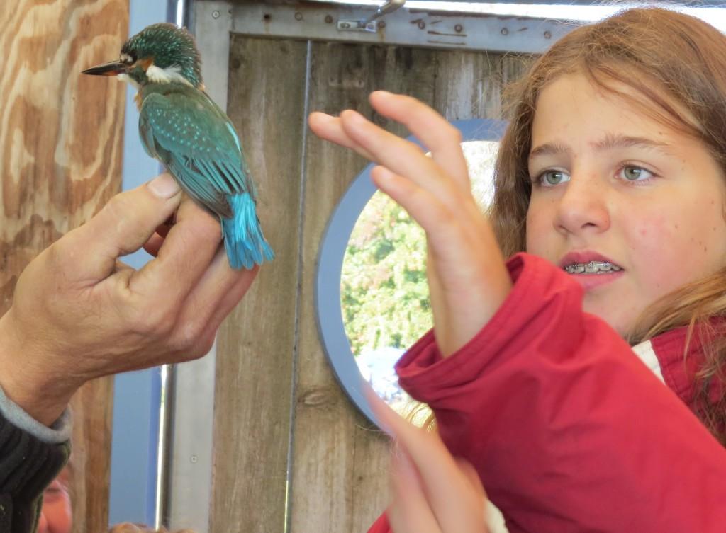 015. t-m jeugdvogelexcursie Ringstation 11 okt 2015 473 - kopie