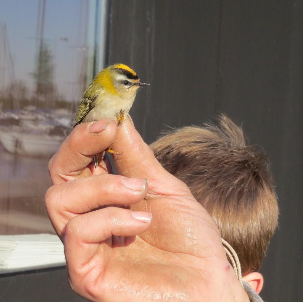 023t-m jeugdvogelexcursie Ringstation 11 okt 2015 520 - kopie